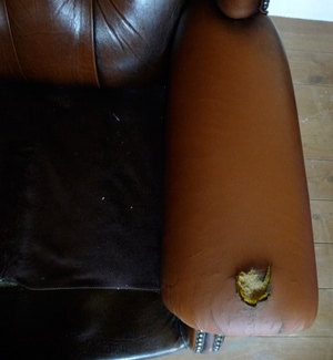 Leather Vinyl Sofa Furniture Repair Restoration Repairs